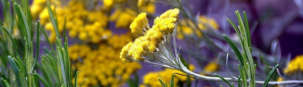 Alpaka Garten- und Landschaftsbau